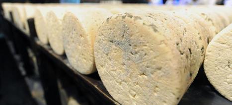 Quand les fromages s'échangent des gènes | Stephanie's collection | Scoop.it