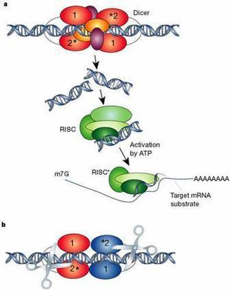 RNA Interference (RNAi) Induced Gene Silencing: A Promising Approach of Hi-Tech Plant Breeding | RNAi | Scoop.it