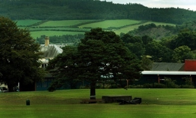 Perth Academy tree's removal would be 'cultural vandalism' - The Courier | Re-arranging Your Field by Removing Trees | Scoop.it