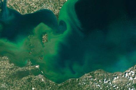 Dairy Farm Pollution Fuels Lake Erie's Toxic Algae | Ohio Wetlands | Scoop.it