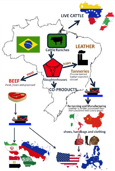 85% of Brazilian leather goes to markets sensitive to environmental concerns   CSR   Scoop.it