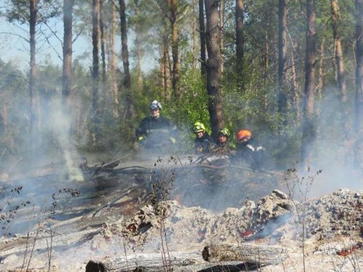 Comment la forêt renaît de ses cendres | Bois, forêt, construction, bois énergie, ameublement et plus | Scoop.it