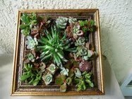 Create Your Own Garden Art with Succulents | Fayette Woman | Garden Art for my Yard | Scoop.it