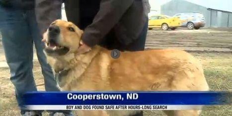 La belle histoire du jour: un enfant disparu sauvé par son chien, qui refusait de le quitter | J'écris mon premier roman | Scoop.it