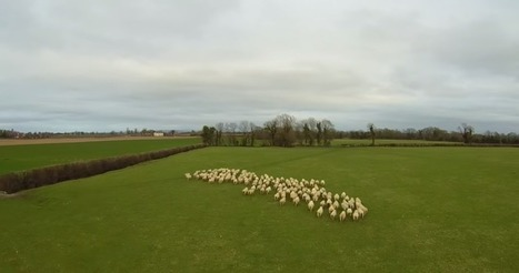 Watch this drone herd sheep like a sheepdog | VentureBeat | Gadgets | by Emil Protalinski | The Robot Times | Scoop.it