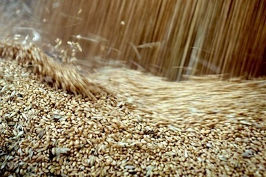Aus help for Egypt grain headache - The Land Newspaper | Agricultural & Horticultural Industry News | Scoop.it
