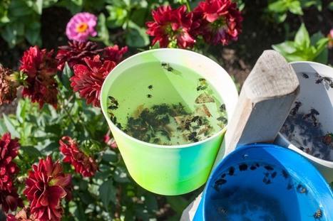 «Tous les jardins sont bons, certains meilleurs que d'autres» | ville et jardin | Scoop.it