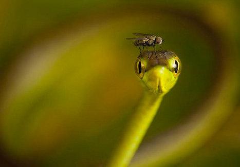 22 photographies qui vous plongeront dans l'intimité des animaux sauvages | Le flux d'Infogreen.lu | Scoop.it