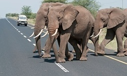 Africa's transport blueprint may be road to ruin for flora and fauna, study says | World Environment Nature News | Scoop.it