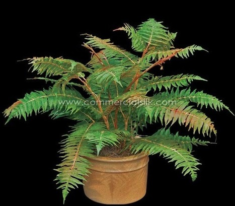 Artificial Sumac Plant - Commercial Silk Int'l | Artificial, Silk Trees Knowledge Center | Scoop.it