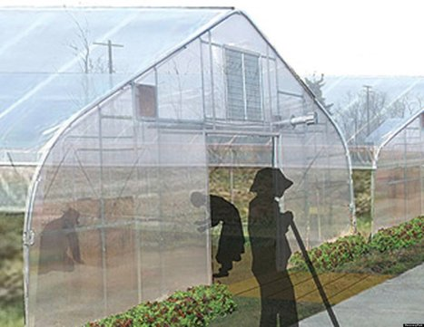 Urban Ag Development Plans To Hire Recovering Addicts, Ex-Prisoners | Urban Aquaponics Farm | Scoop.it