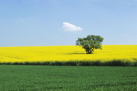 Changer la politique européenne en matière de biocarburants ? Les députés réagissent | transport ecologique | Scoop.it