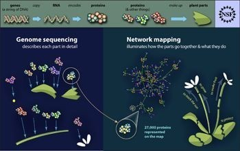 Largest-ever Map of Interactions of Plant Proteins Produced | AnnBot | Scoop.it