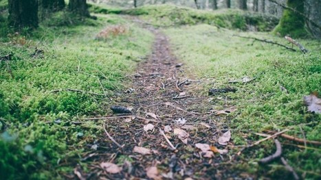 « Chaque entreprise doit trouver son propre chemin »  | Sur le chemin de la liberation | Je, tu, il... nous ! | Scoop.it