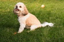 When Pills and Medicines Get Into the Wrong Paws | In Your Pet's Best Interest | Scoop.it