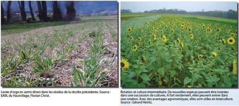 9 affiches pour présenter les expériences d'agroécologie en Alsace | Les colocs du jardin | Scoop.it