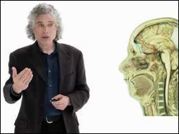 Linguistics as a Window to Understanding the Brain | cognition | Scoop.it