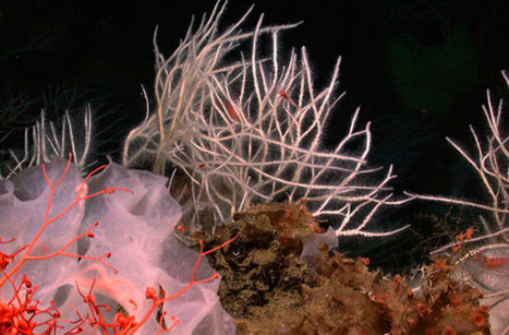 First Animal on Earth Was Likely the Sea Sponge : DNews | Our Oceans | Scoop.it