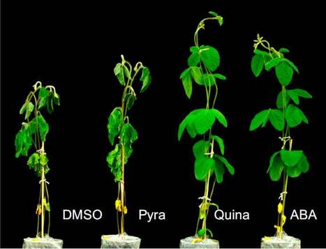 Activation of dimeric ABA receptors elicits guard cell closure, ABA-regulated gene expression, and drought tolerance | Plant Stress | Scoop.it