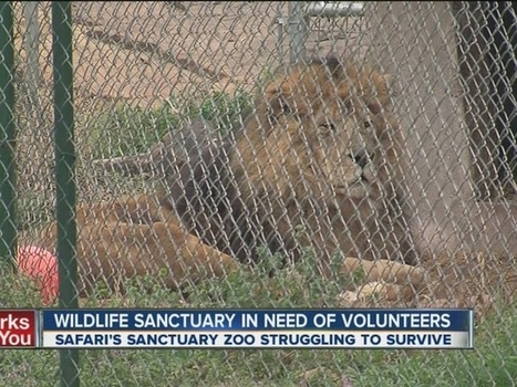 Broken Arrow wildlife sanctuary in need of volunteers; Safari's Sanctuary ... - kjrh.com   Volunteer in Africa   Scoop.it