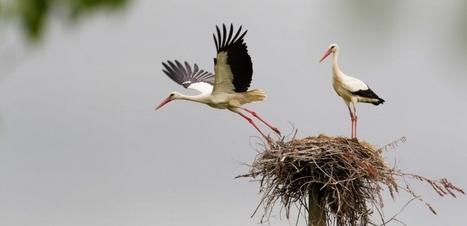La protection des oiseaux, ça rapporte | ECONOMIES LOCALES VIVANTES | Scoop.it