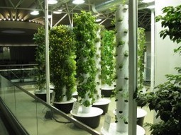 O'Hare Goes Green. Big Time. : Sustainable Chicago | Vertical Farm - Food Factory | Scoop.it