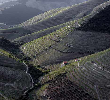 Warm Up: The Douro   Wine website, Wine magazine...What's Hot Today on Wine Blogs?   Scoop.it
