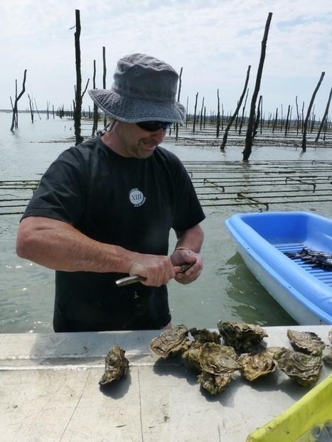 Pescatourisme : mon expérience ostréicole par @CleoDansLeau   Tourisme sur le Bassin d'Arcachon   Scoop.it