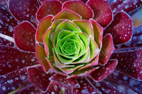 identifying succulents+pictures - Google Search | Misc | Scoop.it