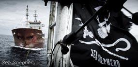 Sea Shepherd :: We be Pirates! | Art and activism | Scoop.it