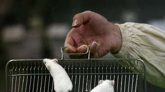 Animal studies riddled with bias, report finds   The Global Village   Scoop.it