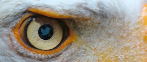 How to Search Twitter With Eagle-Like Vision | Business 2 Community | Mastering Twitter for Business | Scoop.it