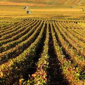 La justice poursuit un viticulteur bio qui dit non aux pesticides | Christophe Durand Conseils | Scoop.it