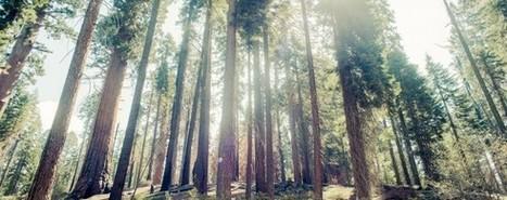 La vida secreta de los árboles | Actualidad forestal cerca de ti | Scoop.it