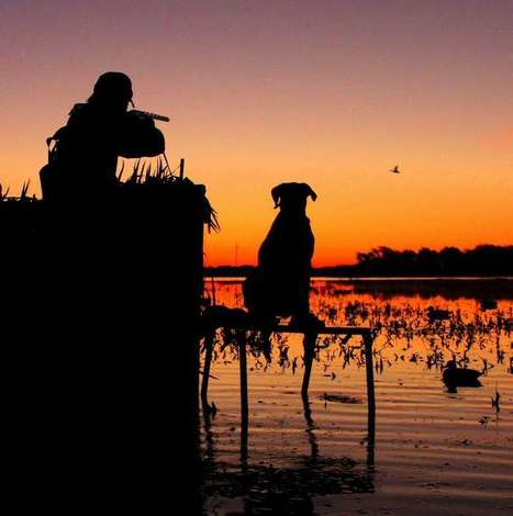 Texas Coast blue-winged teal hunting season | Texas Coast Living | Scoop.it