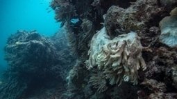 #Scientists call on #Australia to save world's reefs #Barrierreef #environment #Greenpeace | Messenger for mother Earth | Scoop.it