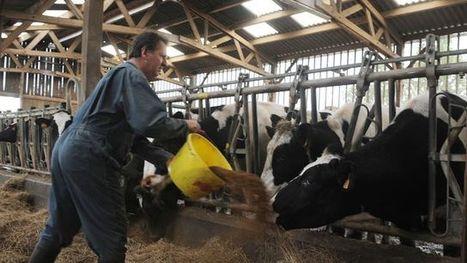 Malgré la crise, l'élevage recrute des salariés - L'Express | Revue de presse : l'agriculture en Aquitaine | Scoop.it
