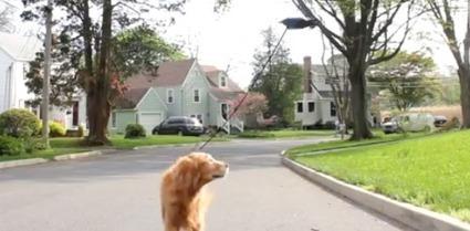 Un Américain conçoit un drone pour promener son chien | CaniCatNews-actualité | Scoop.it