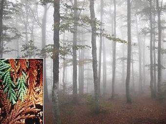 Arboretum de La Foux « Tourisme en Cévennes, sur les Causses et le Mont Aigoual | Arboretums, parcs et jardins,jardin botanique | Scoop.it