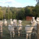 Alpaca Sitting: Guest Post for Trusted Housesitters   House Sitting   Scoop.it