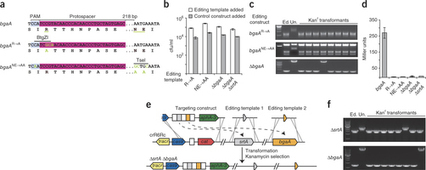 RNA-guided editing of bacterial genomes using CRISPR-Cas systems | SynBioFromLeukipposInstitute | Scoop.it
