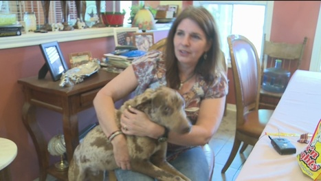 """Dog Shot in Head Gets a Second """"Chance"""" at Life - KBTX 