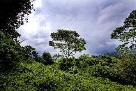L'UNESCO rappelle à l'ordre gouvernements et compagnies pétrolières | Virunga - WWF | Scoop.it