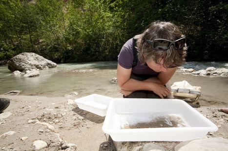 La faune des rivières profite des eaux plus chaudes et de meilleure qualité   Irstea   Environnement actus   Scoop.it