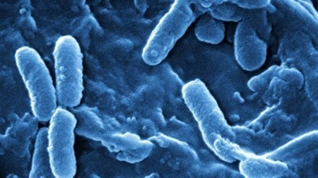 Bacteria-killing blue light used to stop infections | Longevity science | Scoop.it