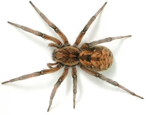 5 Different Ways That You Can Employ For Getting Rid of Wolf Spiders | Zambiaz Guest Blog | Scoop.it