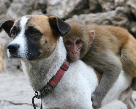 16 unlikely animal friendships | Food for Pets | Scoop.it