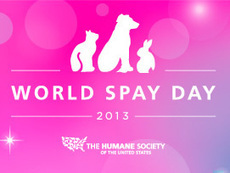 Sparkle, baby! Check out The Humane Society of the United States' World Spay Day 2013 Pet Pageant! Enter your pet's photo today, and spread the message that spay and neuter saves pets' lives | Feline Health and News - manhattancats.com | Scoop.it