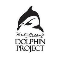 Rics Dolphin Project's channel. | #Orca #Avenger @VidarOceans | Scoop.it