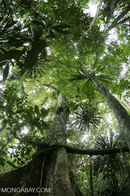 What's ahead for rainforests in 2016? 10 things to watch | Rainforest EXPLORER:  News & Notes | Scoop.it